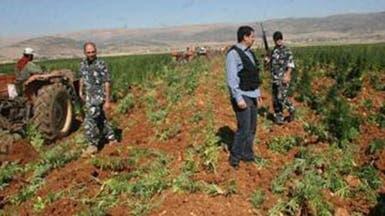 تشريع الحشيش في لبنان.. واقع على تويتر!