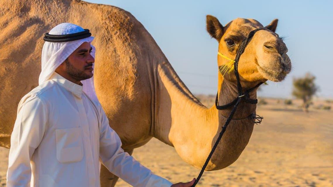 camel shutterstock