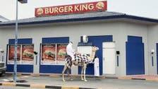Detour! Man on camel visits Qatar drive-thru