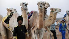 Saudi warns of camel products amid MERS scare