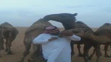 """بالفيديو.. سعودي يتحدى """"كورونا"""" ويقبل نوقه"""