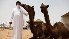Saudi Arabia warns of MERS risk from camels