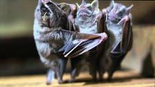 بالفيديو.. عندما ترقص الخفافيش
