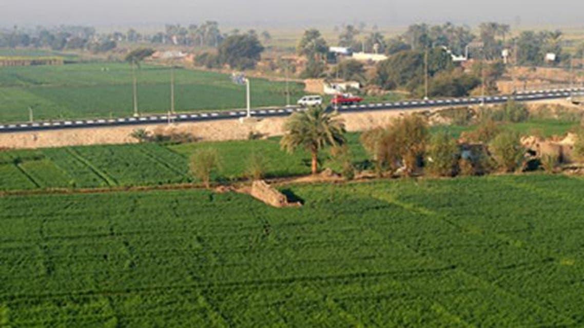 زراعة مصر