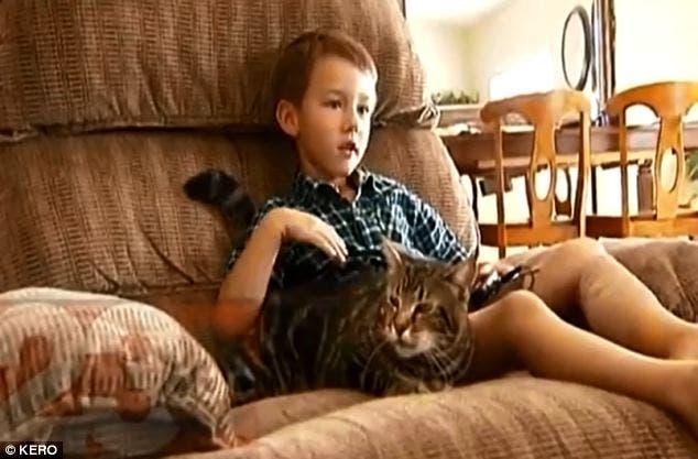الطفل الذي هاجمه الكلب وأنقذته القطة