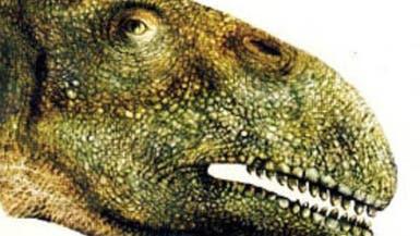"""ديناصور مغربي عمره 112 مليون سنة يغيب """"إلى الأبد"""""""