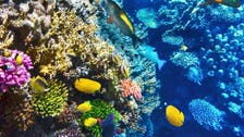 Dive in! The Mideast's most spectacular scuba diving spots