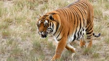 Donors pledge $80 million to protect wild cats
