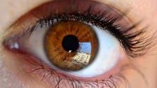 آنکھوں کی بینائی برقرار رکھنے کے لیے 8 غذائیں