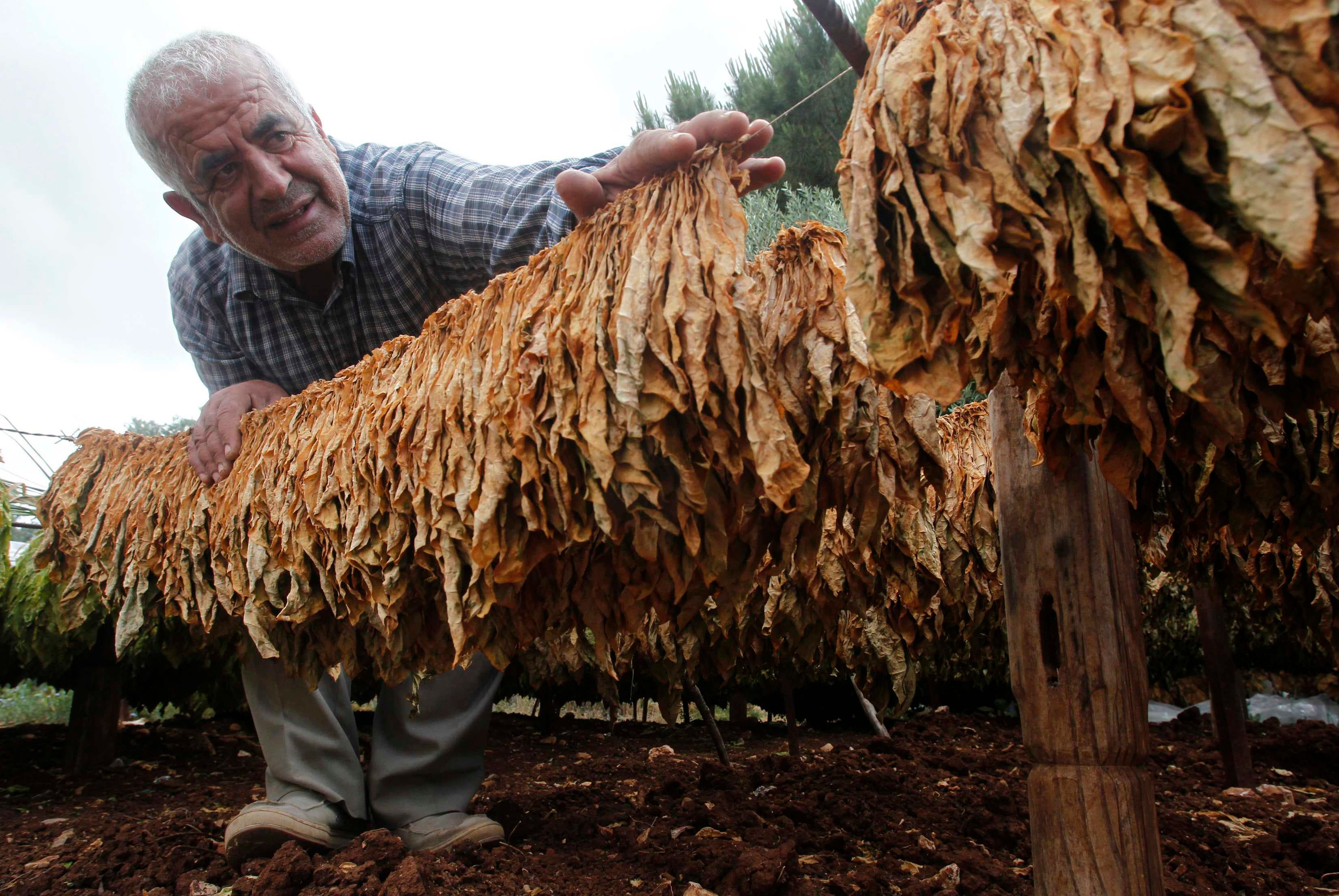 الزراعة في لبنان تاثرت بالظروف الاقتصادية