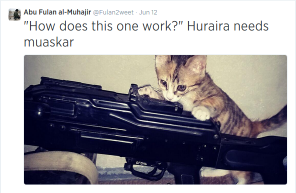 ISIS cats