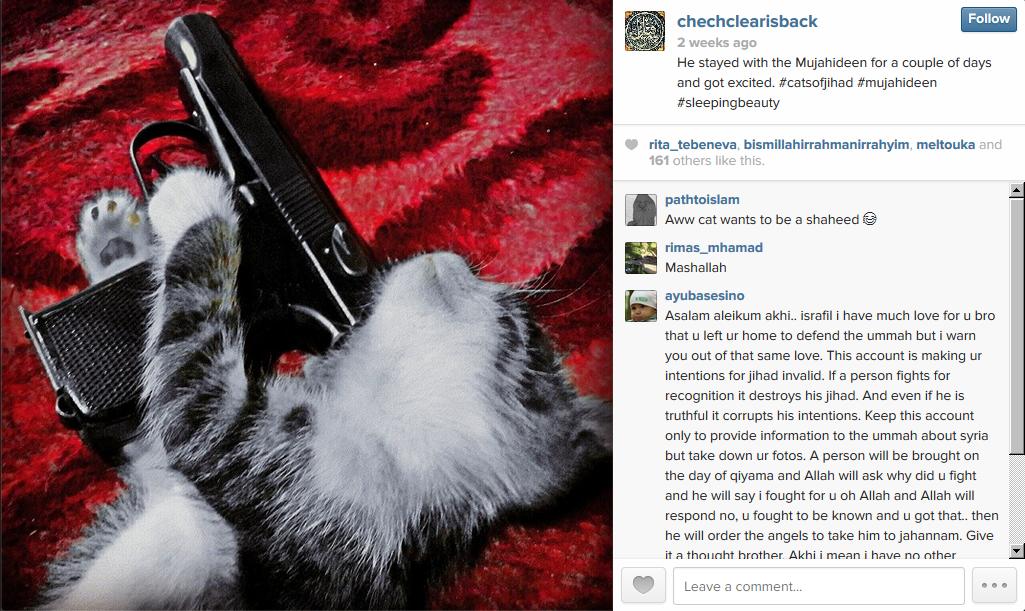 cat instagram