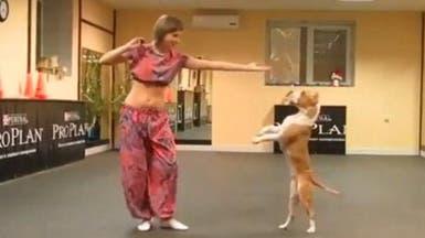 """كلب """"بيت بول"""" يجيد الرقص الشرقي"""