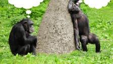 Can you speak Chimpanzee? Ape sign language gets translated