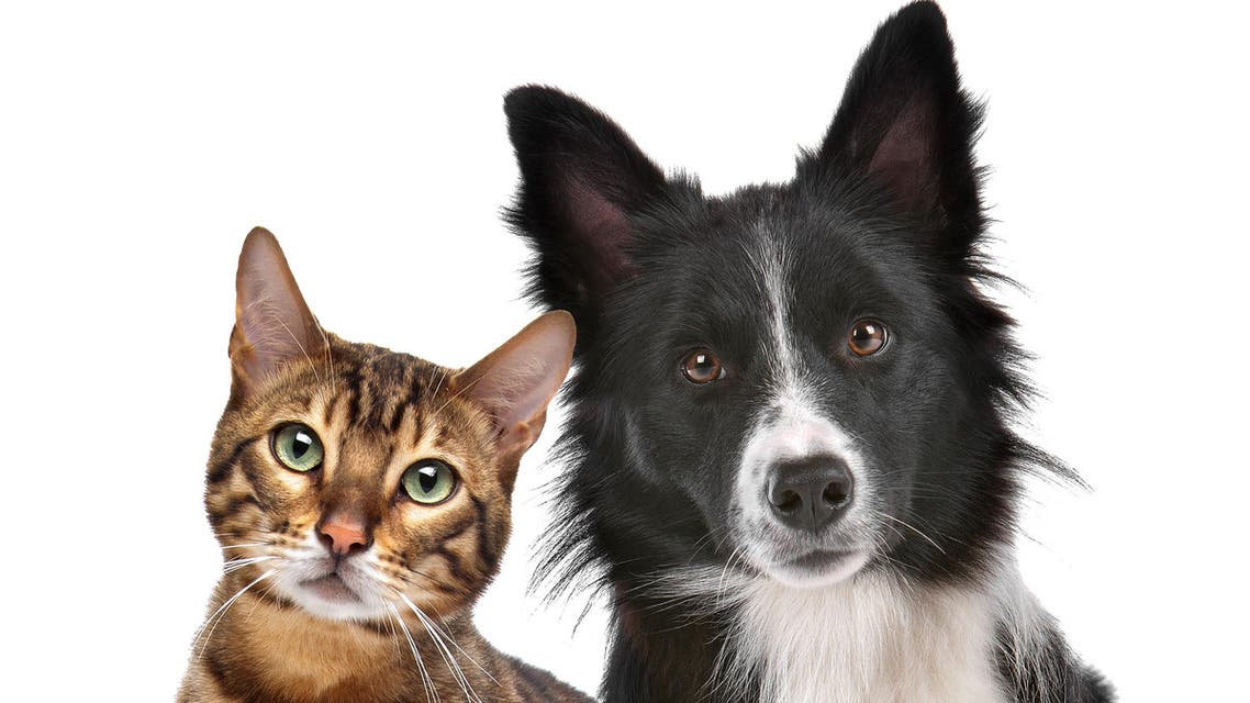 pets shutterstock