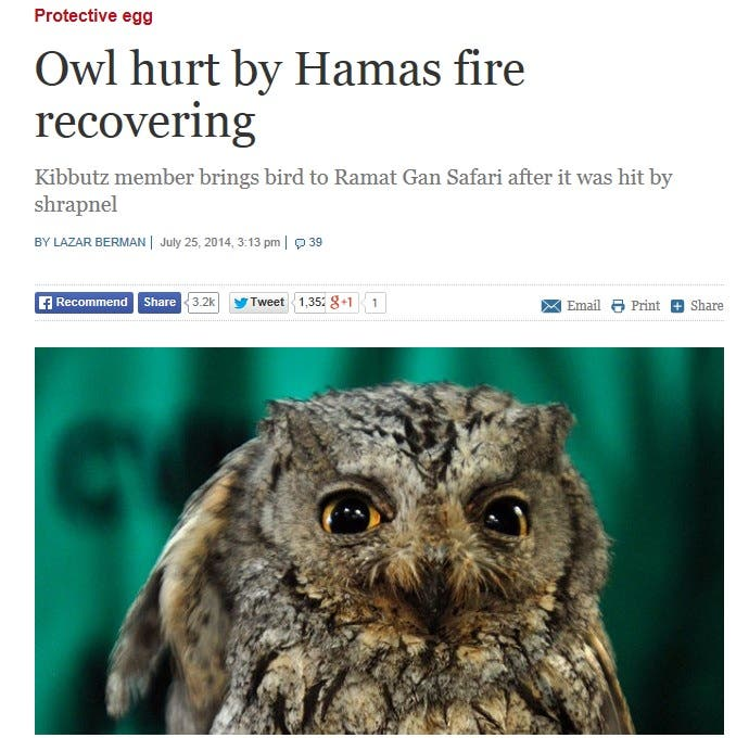 Time of Israel screen shot owl