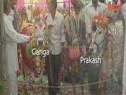كلفة زواج البقر في الهند أكثر من 15 ألف دولار