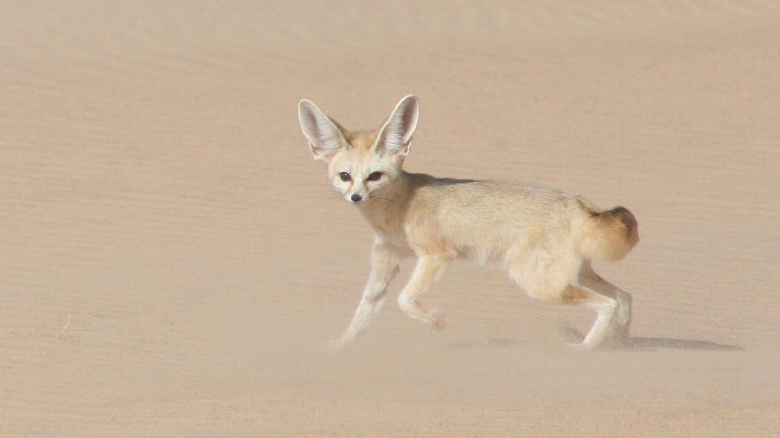 الصيد البري يهدد الحيوانات في موريتانيا