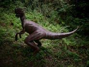 هذا ما تبقى من ديناصور يعود إلى 195 مليون سنة