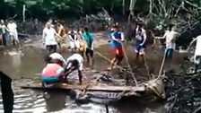 Giant crocodile caught in the Philippines