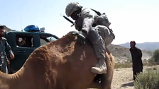 Video shows soldiers unsuccessfully attempting to mount camels