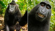 Monkey 'selfies' spark copyright war with Wikipedia