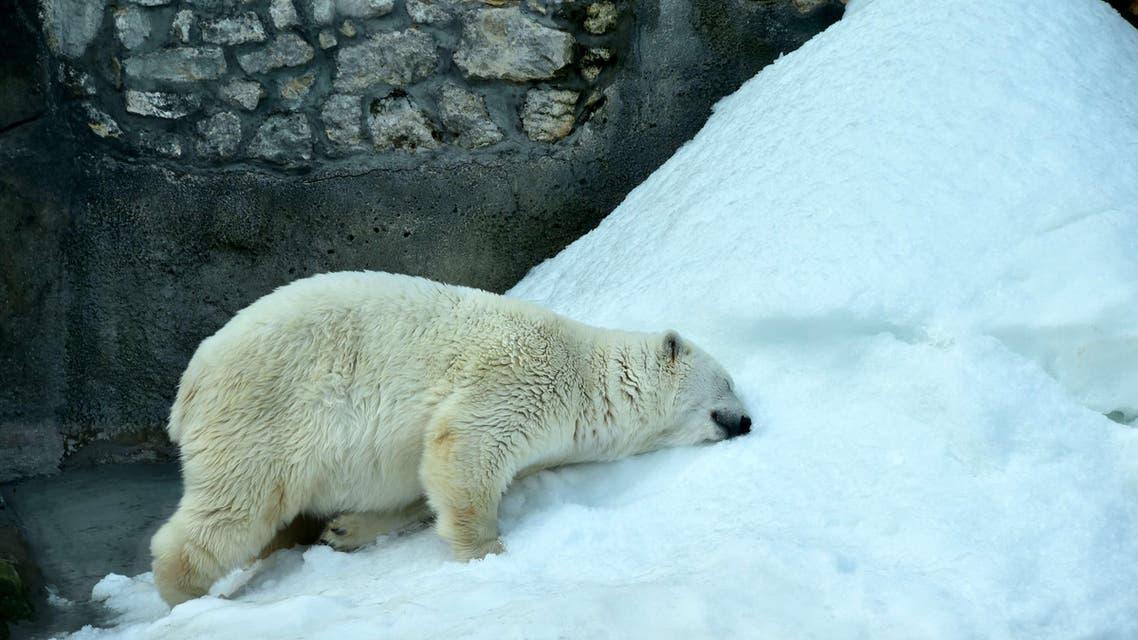 Zoo's bears