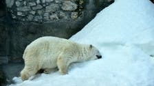 Un-bear-able? Russia food ban hits Moscow zoo's picky bears