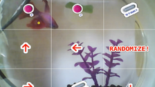 Live-stream of a fish playing Pokémon is a huge hit online