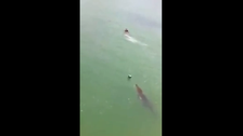 Terrifying video of crocodile chasing a tourist in Mexico goes viral