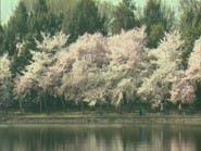 """شجرة """"فريدة""""من نوعها.. تحمل 40 نوعاً من الفاكهة"""