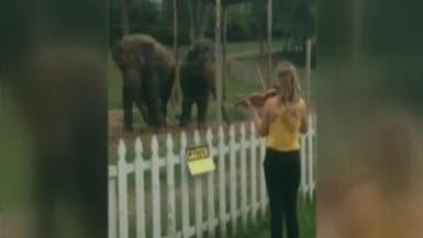 """بالفيديو.. فيلة ترقص على موسيقى """"باخ"""""""