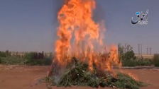 Video shows ISIS burning marijuana in Syria