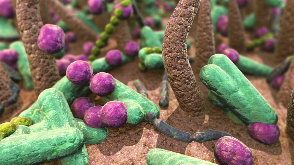 Bacteria (shutterstock)
