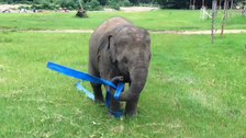 Baby elephant has whale of time with 'skipping rope'