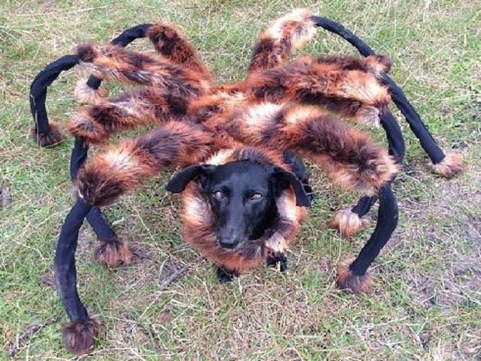 ویدیوی «سگ عنکبوت» در دو روز بیش از 20 میلیون نفر را ترساند