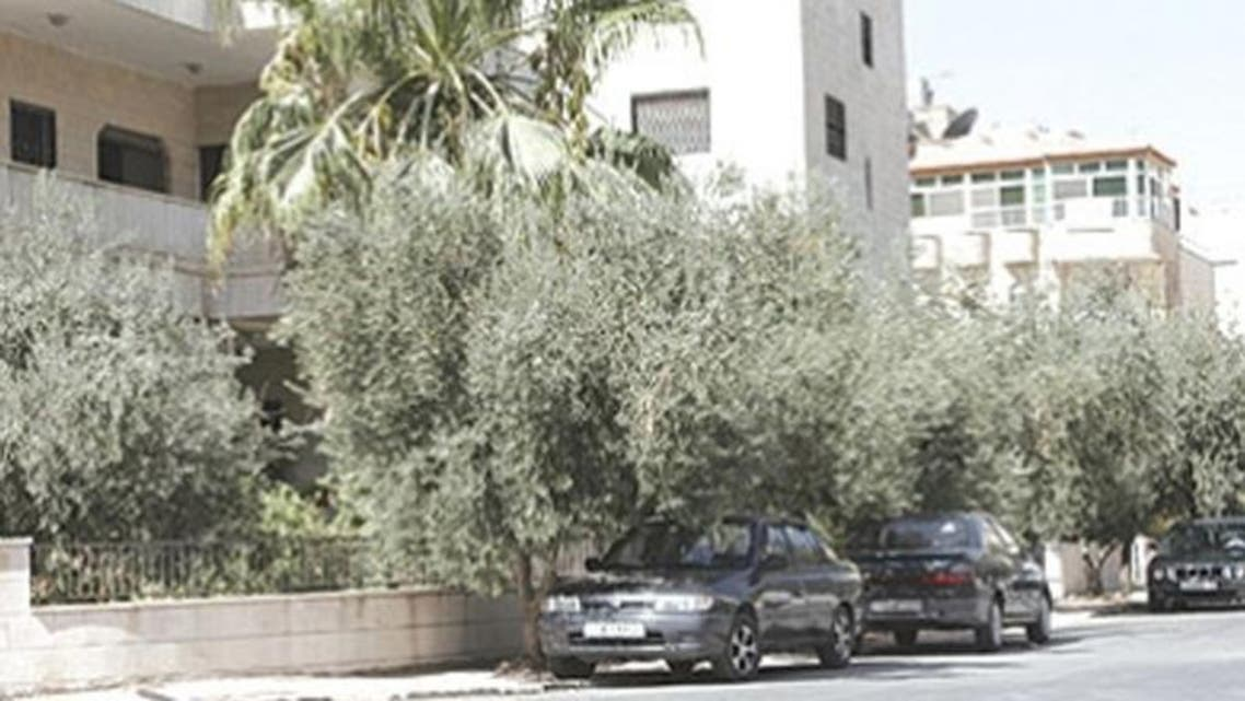 Moroccan city Oujda orders that olive trees be removed by the end of the year. (Photo courtesy of http://chaabpress.com)