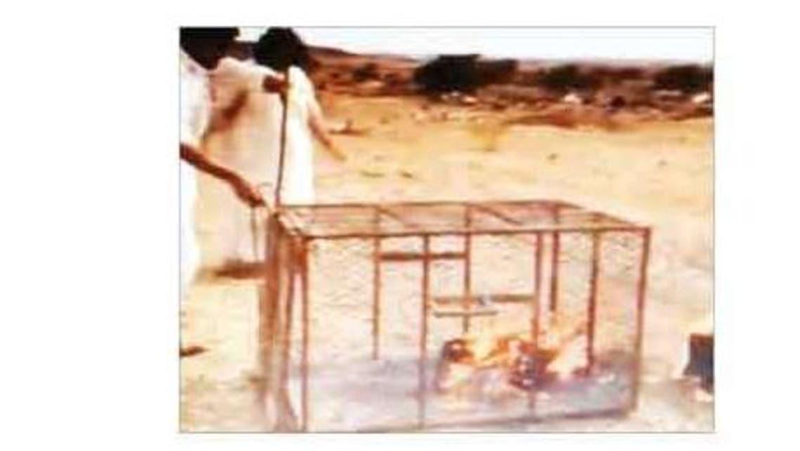 حرق ثعلب