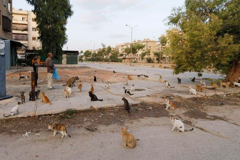 Feeding Aleppo's abandoned cats