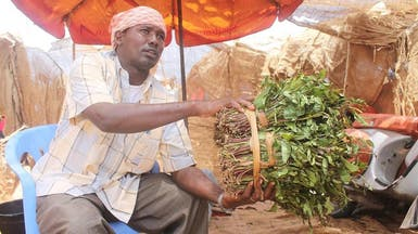 """بعد حظره في بريطانيا.. """"القات"""" يزدهر في الصومال"""