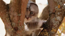 Popular game trailer remade with kittens