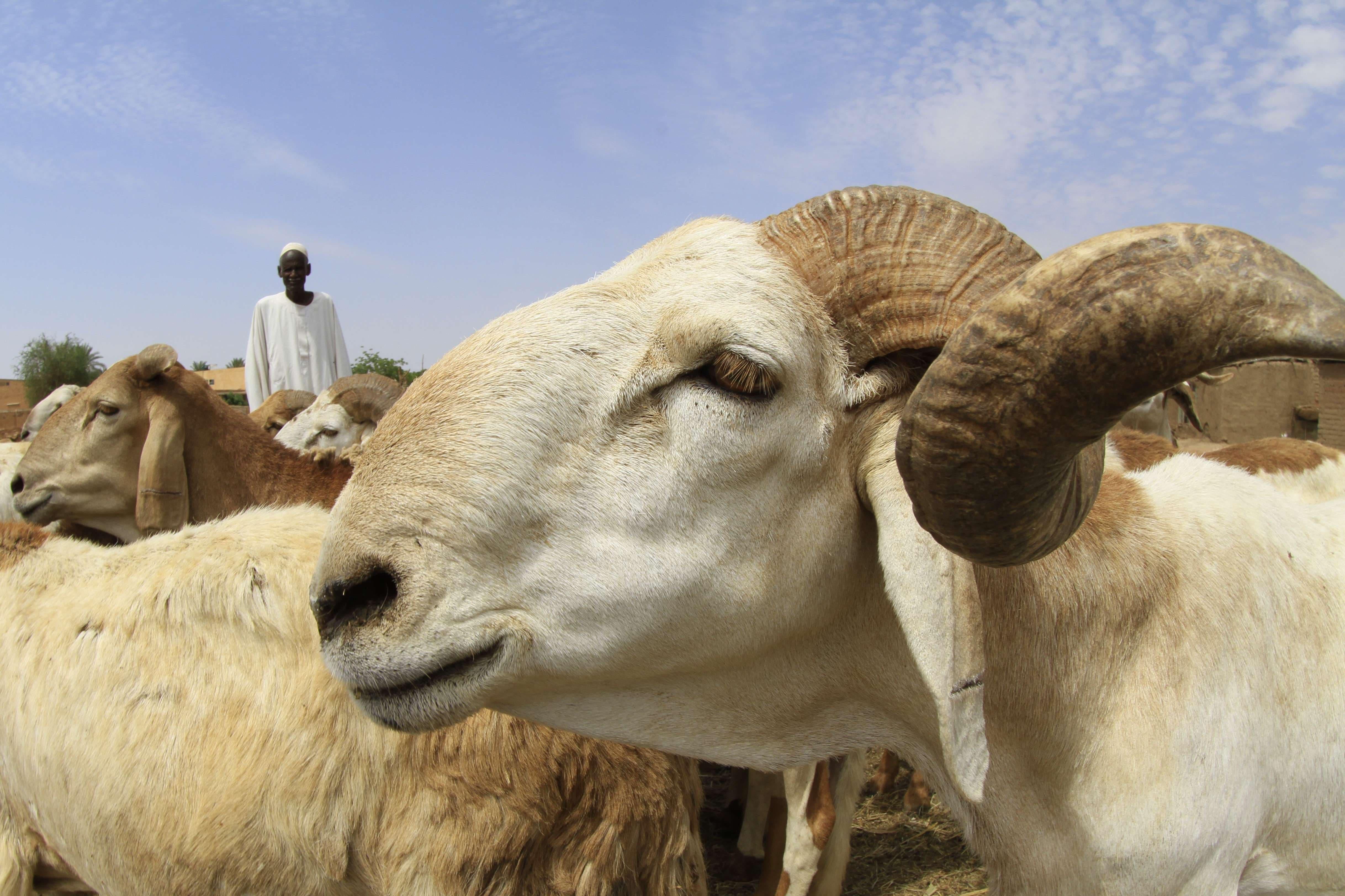 Sudan readies for Eid al-Adha