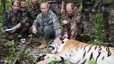 نمر سيبيري أطلقه بوتين.. يعبر الحدود إلى الصين