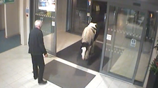 UK police station visited by horse