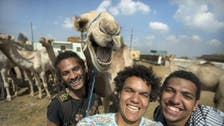 Meet the 'happy' Egyptian camel snapped in a selfie gone viral