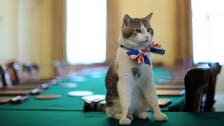 UK parliament catfight over mouse in the house