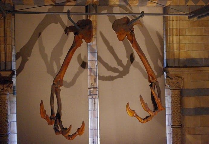 مخالب أسرع الديناصورات كانت كالخناجر، واستخدمها لسحق فرائسه وتهشيمها ليسهل عليه التقاطها بلسانه
