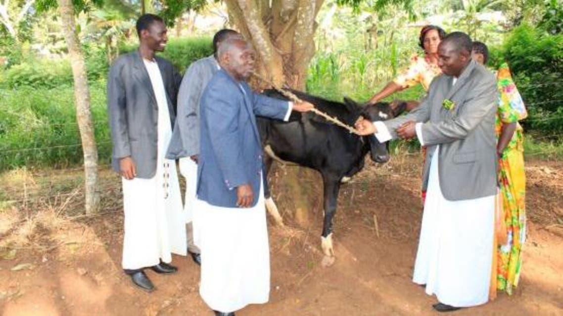 أوغندا.. قيمة المرأة المتزوجة بعدد بقرات مهرها