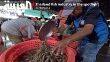Thailand fish industry in the spotlight