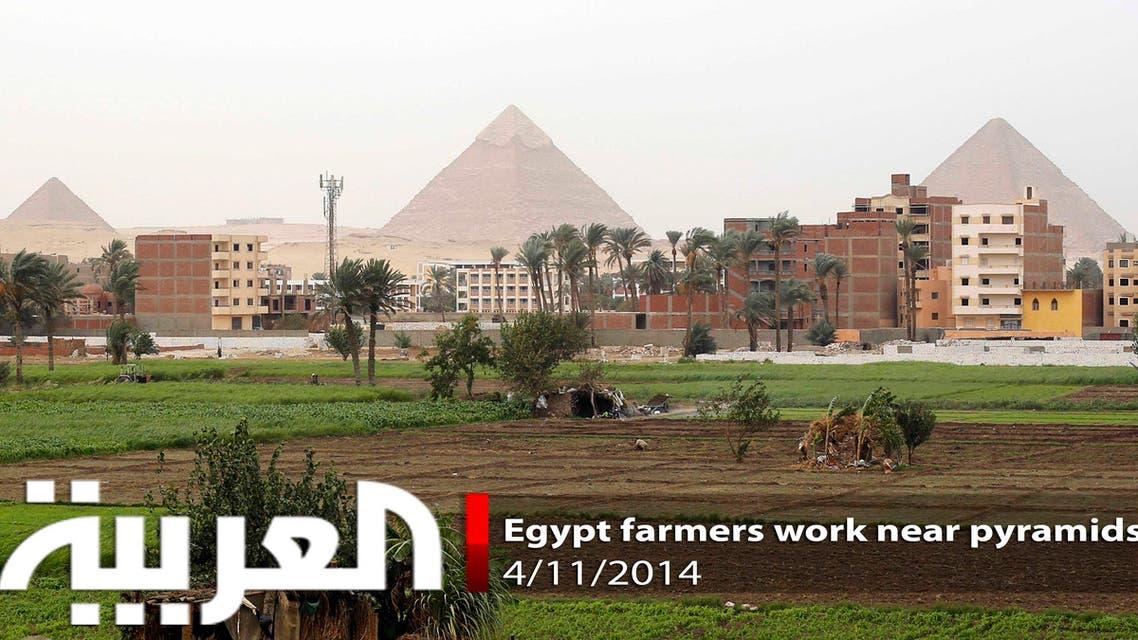 Egyptian farmers work near the Great Giza pyramids
